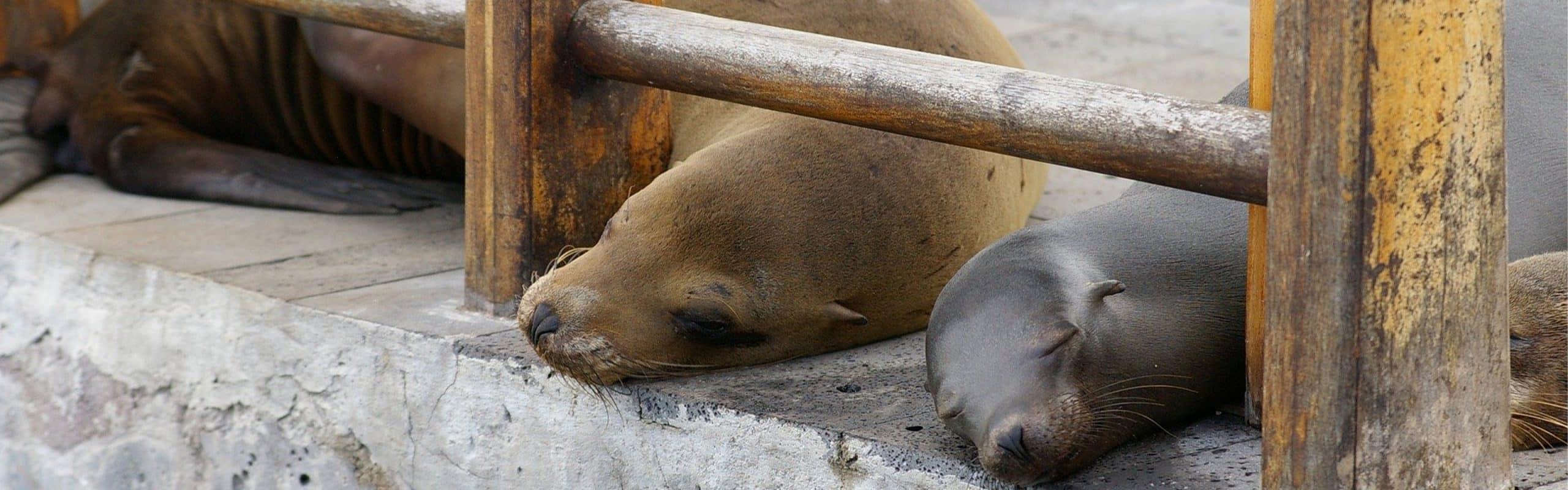 Galapagos Free Activities Hero 3200.1000
